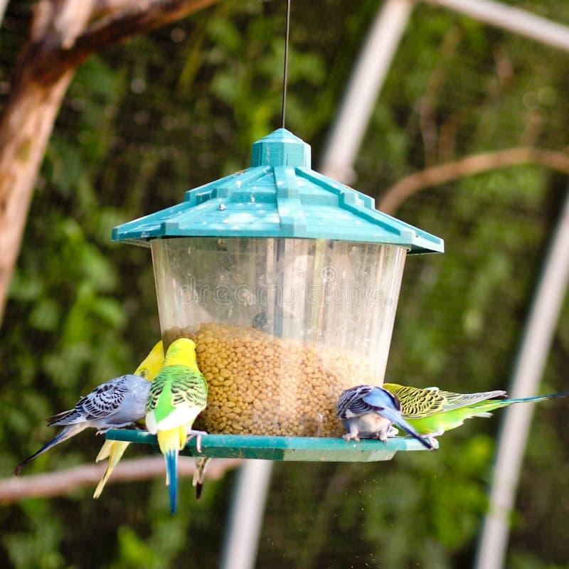 Perroquets de Ccolorful photos libres de droits