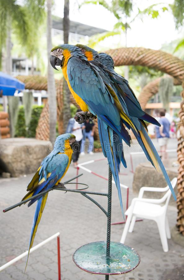 Perroquets en parc de Madame Nong Nooch photographie stock libre de droits