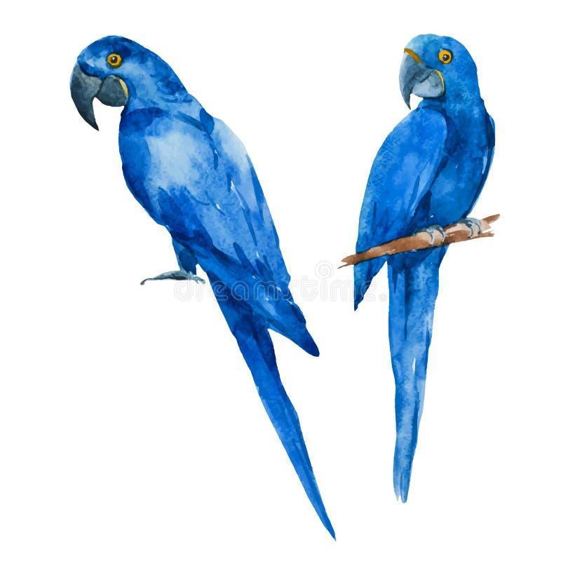 Perroquets gentils de bleu d'aquarelle illustration libre de droits