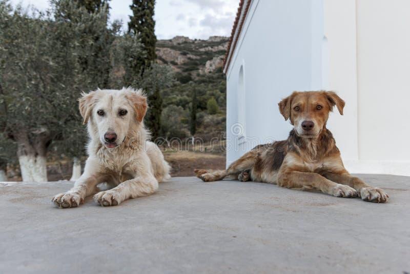 Perros imagen de archivo