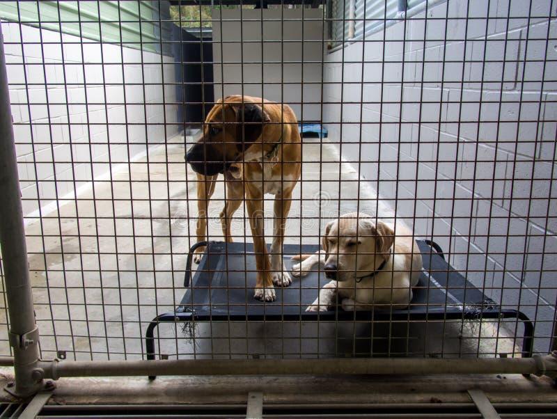 Perros abandonados del refugio para personas sin techo detrás de barras en la libra imagenes de archivo