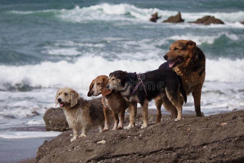 Perros asombrosos en la playa fotos de archivo