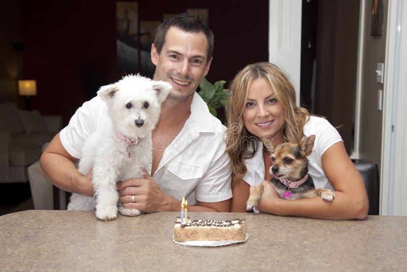 Perros con la torta de cumpleaños imágenes de archivo libres de regalías