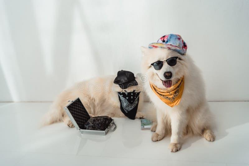 Perros criminales imagen de archivo