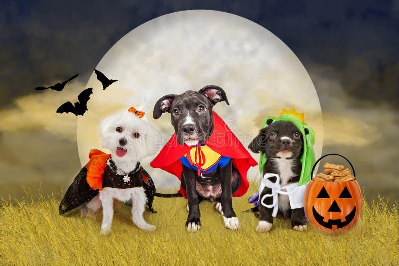 Perros de Halloween en un campo con la luna imagenes de archivo