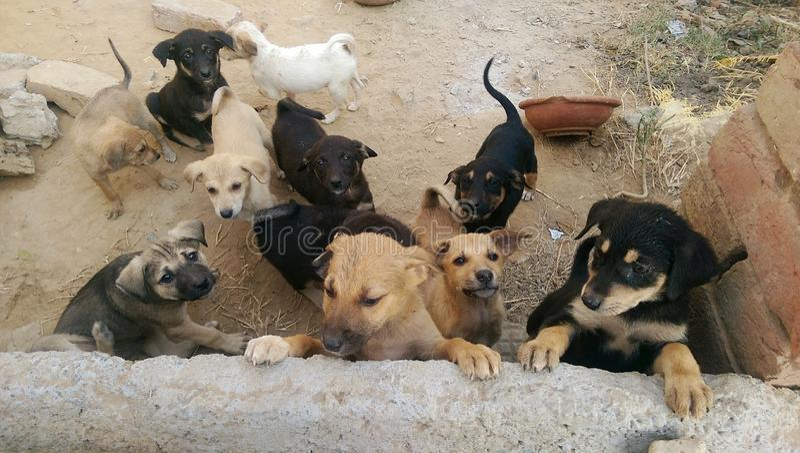 Perros de la calle fotos de archivo