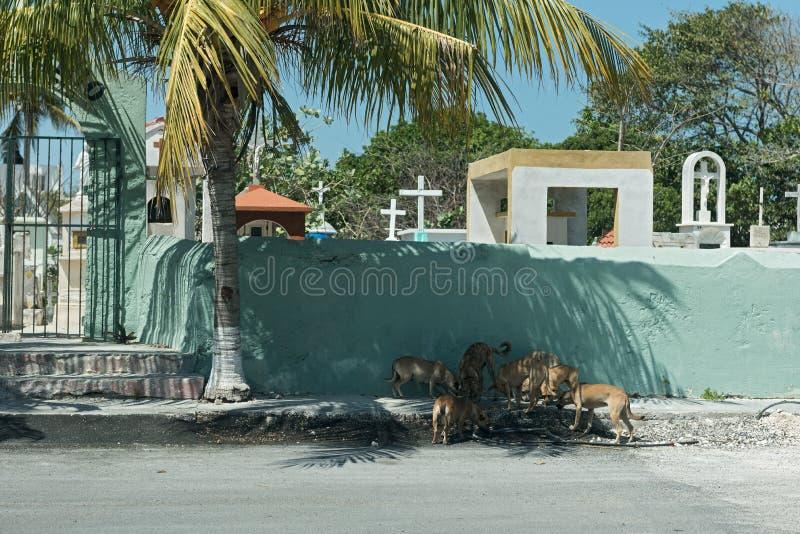 Perros de la calle delante de una pared del cementerio en Progreso, México imagen de archivo libre de regalías
