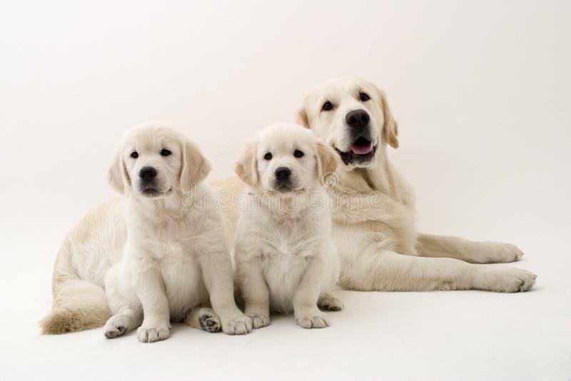 Perros de la familia imagenes de archivo