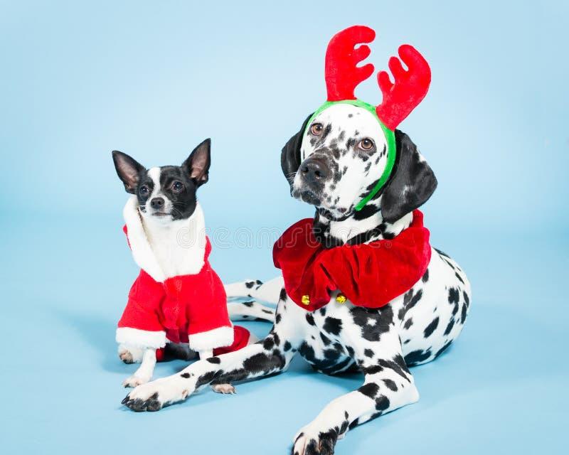 Perros de la Navidad fotografía de archivo