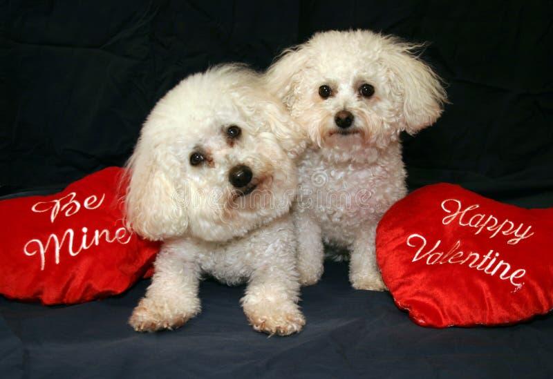 Perros de la tarjeta del día de San Valentín fotografía de archivo libre de regalías