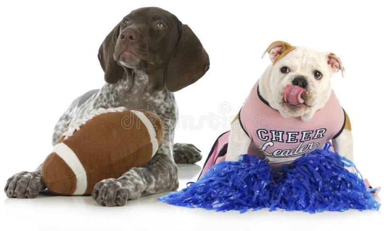 Perros de los deportes fotografía de archivo