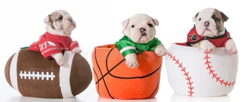 Perros de los deportes fotografía de archivo libre de regalías