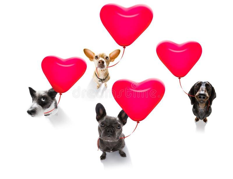 Perros de los valeintines del feliz cumpleaños fotografía de archivo