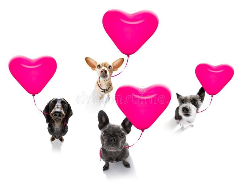 Perros de los valeintines del feliz cumpleaños fotos de archivo libres de regalías
