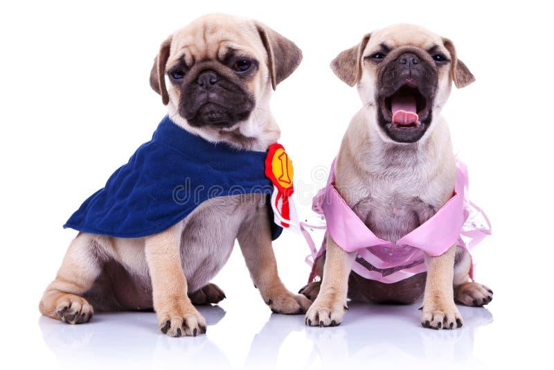 Perros de perrito del barro amasado de la princesa y del campeón fotos de archivo libres de regalías