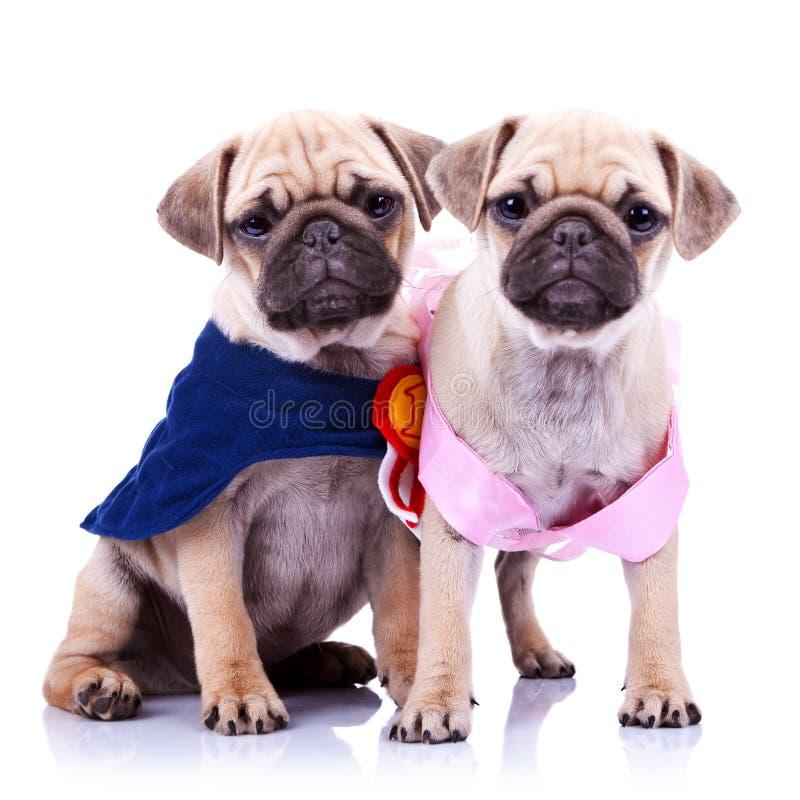 Perros de perrito del barro amasado de la princesa y del campeón foto de archivo libre de regalías
