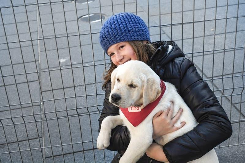 Perros de perritos de Mira imagen de archivo