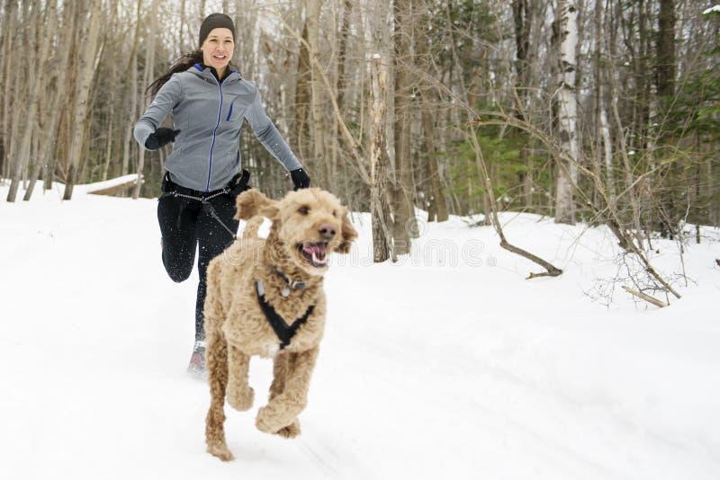 Perros de trineo de Canicross que tiran de la estación joven del invierno de Womanin imagen de archivo