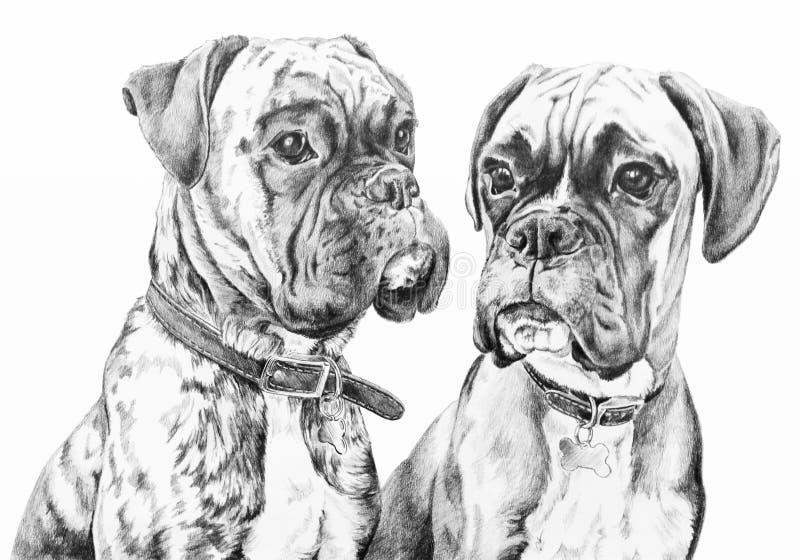 Perros del boxeador libre illustration