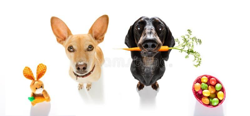 Perros del conejito de pascua foto de archivo