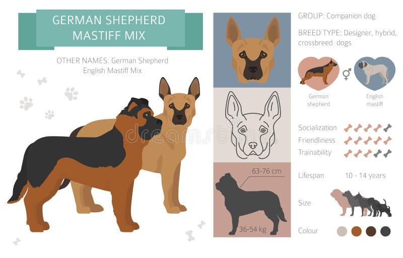 Perros del diseñador, híbrido, colección híbrida de los chuchos de la mezcla aislada en blanco Clipart plano del estilo infograph stock de ilustración