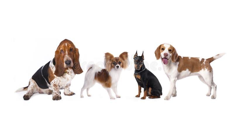 Perros del grupo fotografía de archivo libre de regalías