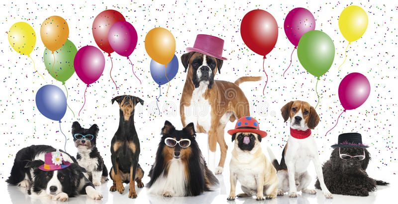 Perros del partido imagen de archivo libre de regalías