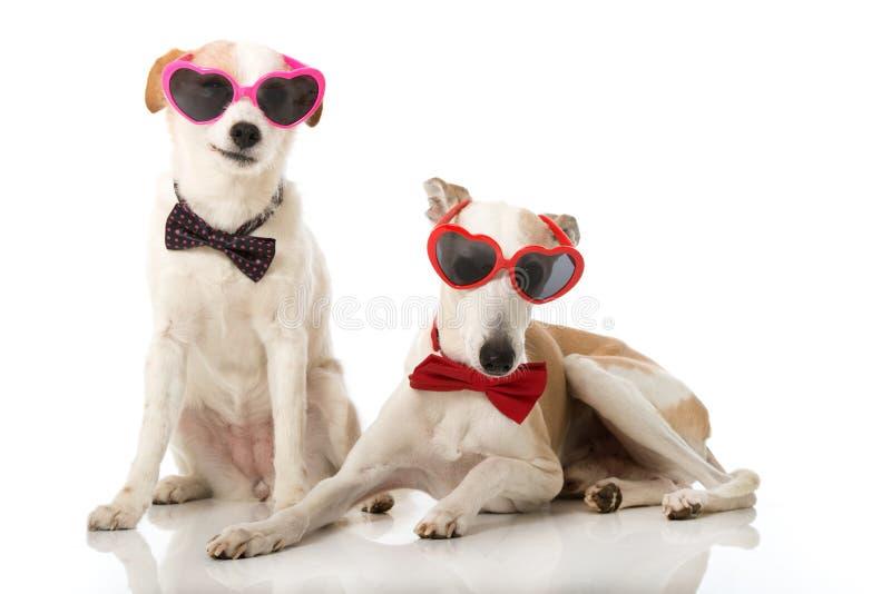 Perros del partido foto de archivo libre de regalías