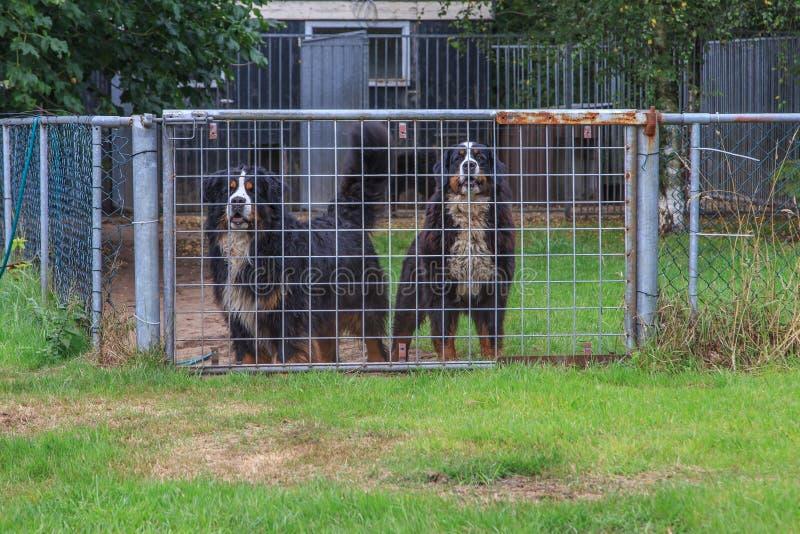 Perros detrás de la cerca fotos de archivo