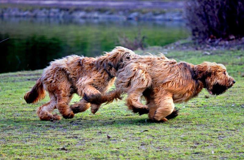 Perros divertidos que se divierten en el parque imagen de archivo libre de regalías