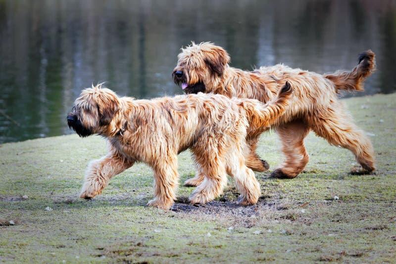 Perros divertidos que se divierten en el parque imagen de archivo