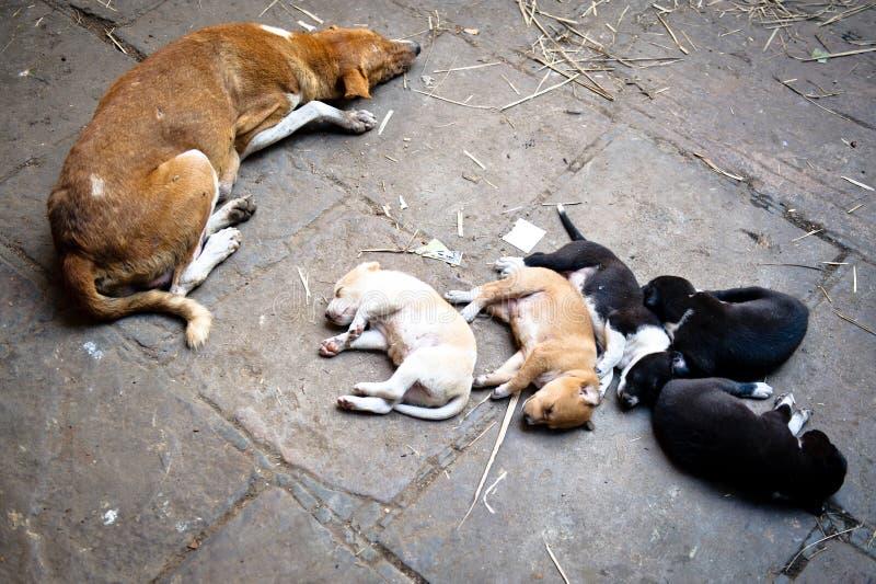 Perros el dormir foto de archivo