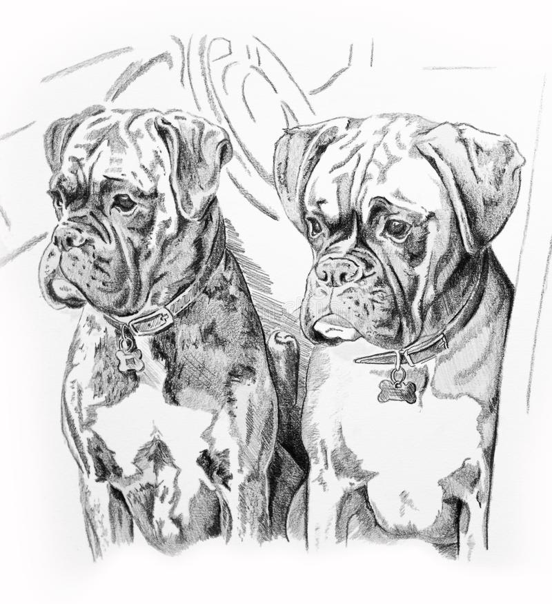 Perros en coche stock de ilustración