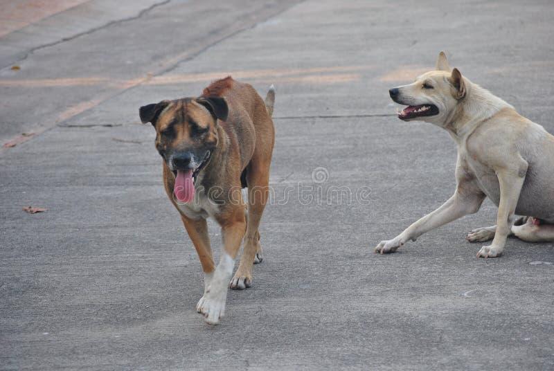 Perros en el camino fotos de archivo libres de regalías