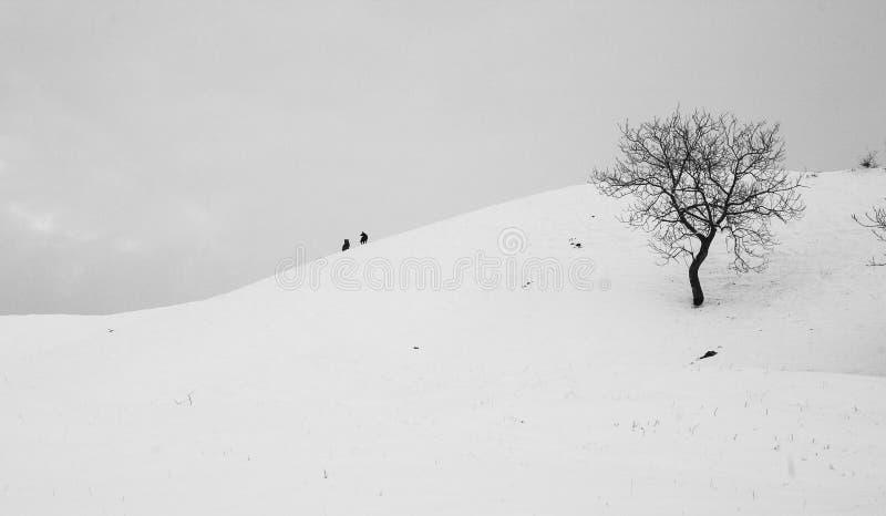 Perros en la cima de una colina fotos de archivo
