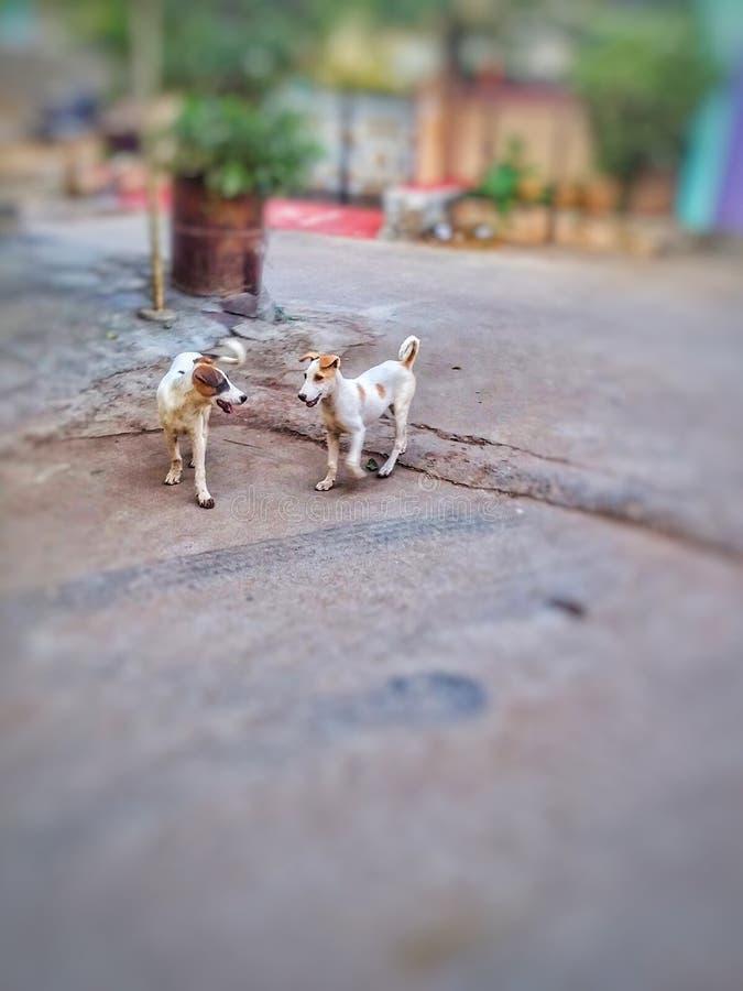 Perros en la conversación imagen de archivo libre de regalías