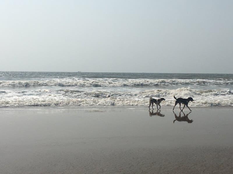 Perros en la playa imágenes de archivo libres de regalías