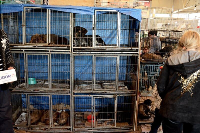 Perros en las jaulas para la venta en un mercado en Azerbaijan fotos de archivo