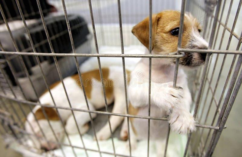 Perros en una jaula fotografía de archivo libre de regalías