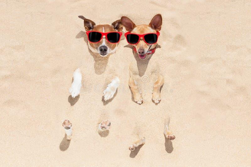 Perros enterrados en arena imagen de archivo
