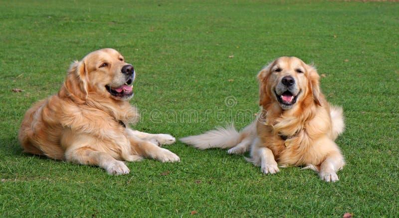 Perros felices fotos de archivo