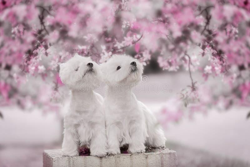 Perros felices que presentan en banco de parque fotos de archivo libres de regalías
