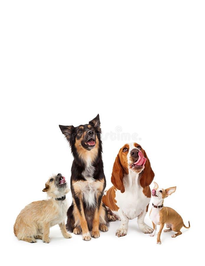 Perros hambrientos de la variedad que miran para arriba fotografía de archivo