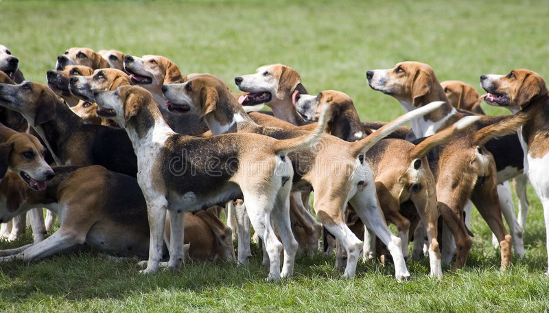 Perros listos para buscar imágenes de archivo libres de regalías