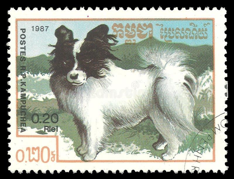 Perros, Papillon fotografía de archivo libre de regalías