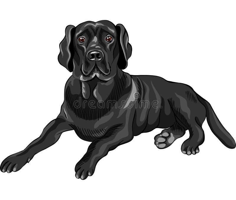 Perros perdigueros de Labrador del negro de la casta del perro del bosquejo ilustración del vector