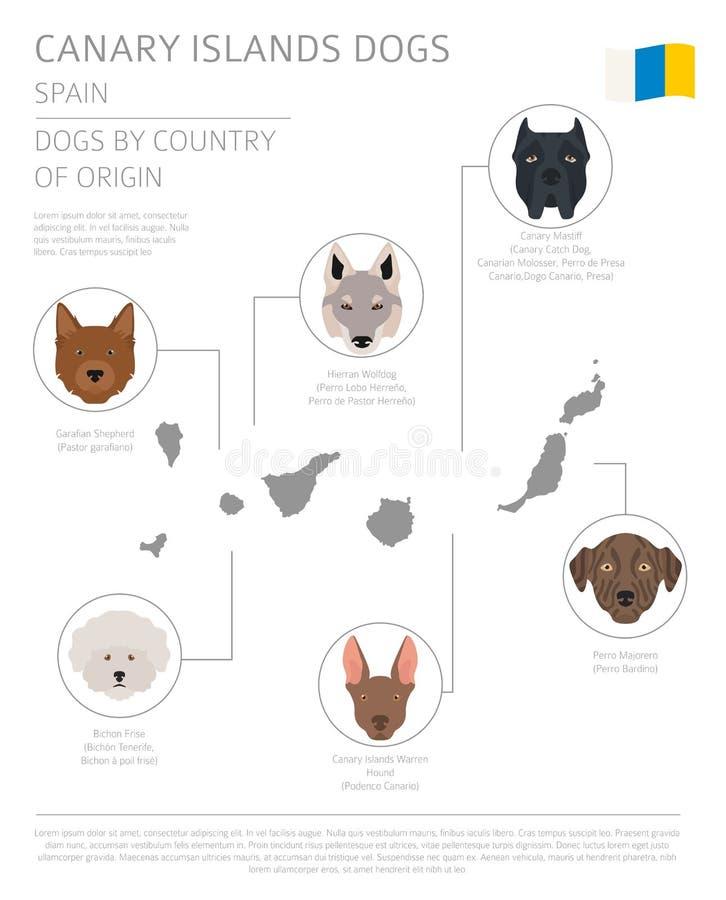 Perros por el país de origen españa Razas del perro de las islas Canarias inf stock de ilustración