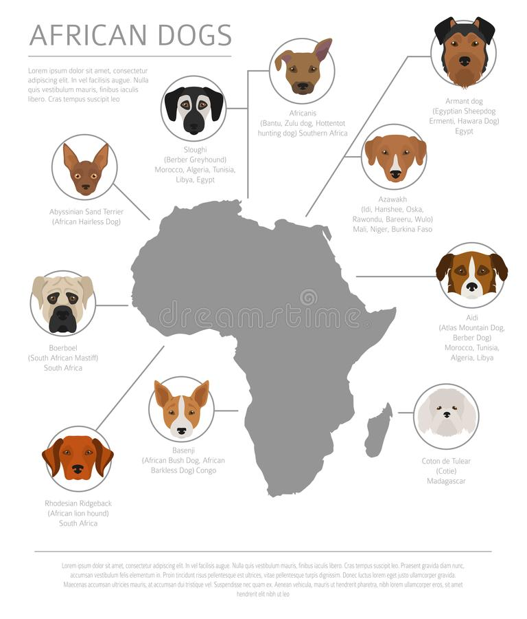 Perros por el país de origen Razas africanas del perro Templ de Infographic ilustración del vector