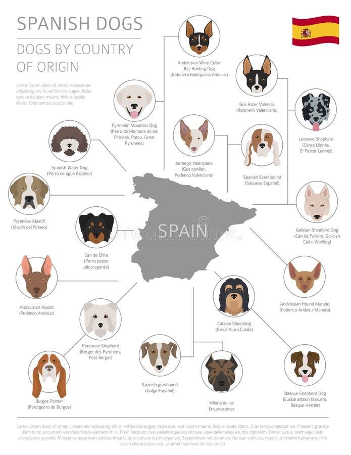 Perros por el país de origen Razas españolas del perro Templ de Infographic stock de ilustración