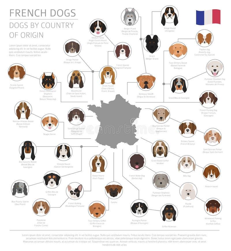 Perros por el país de origen Razas francesas del perro Templa de Infographic ilustración del vector